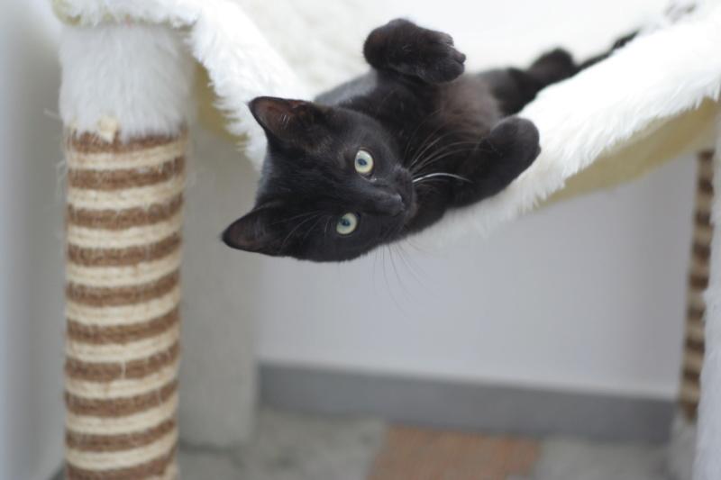 PAMA, chatonne européenne noire, née le 28.04.19 Img_3231