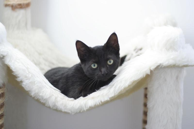 PAMA, chatonne européenne noire, née le 28.04.19 Img_3232