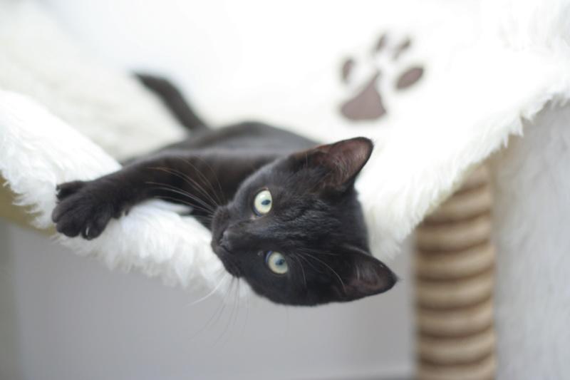 PAMA, chatonne européenne noire, née le 28.04.19 Img_3312