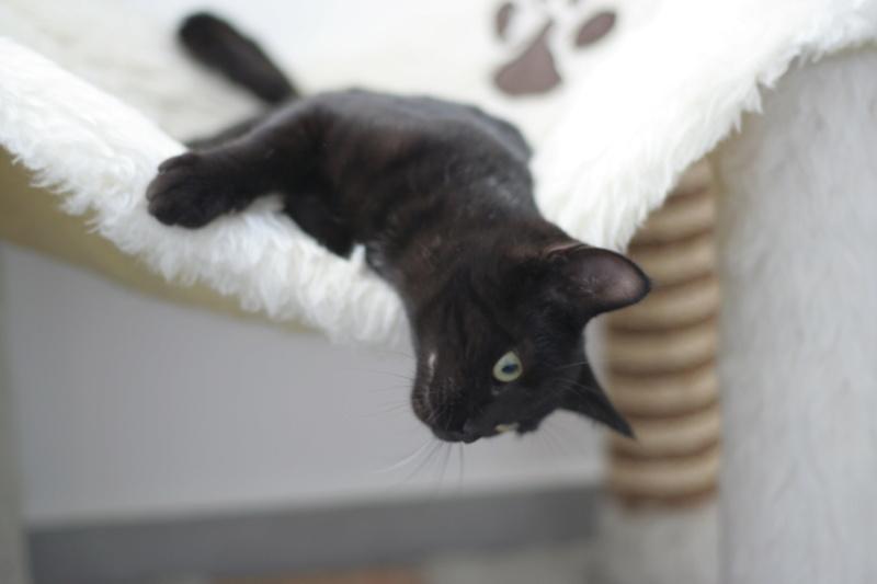 PAMA, chatonne européenne noire, née le 28.04.19 Img_3313