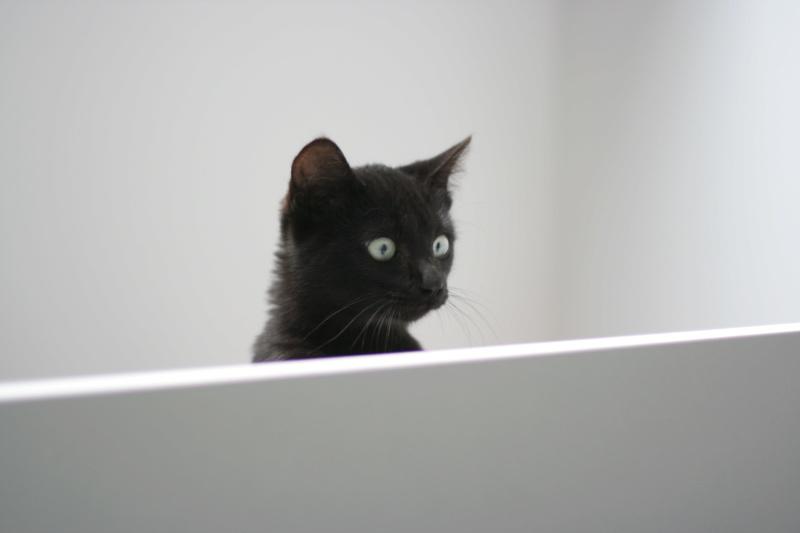 PITOU, chaton noir né le 02.06.19 Img_3817