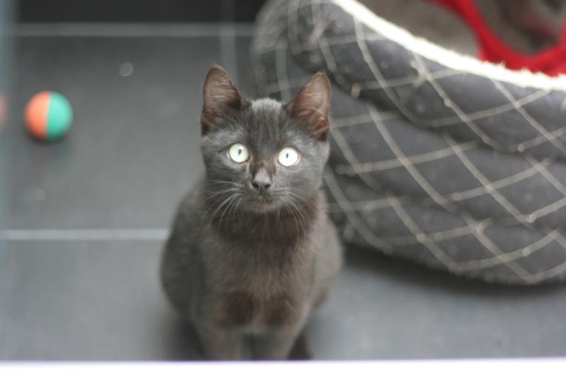 PITOU, chaton noir né le 02.06.19 Img_3818