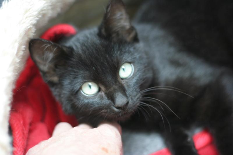 PITOU, chaton noir né le 02.06.19 Img_3819