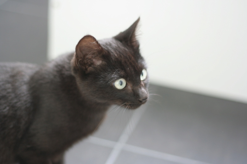 PITOU, chaton noir né le 02.06.19 Img_3822