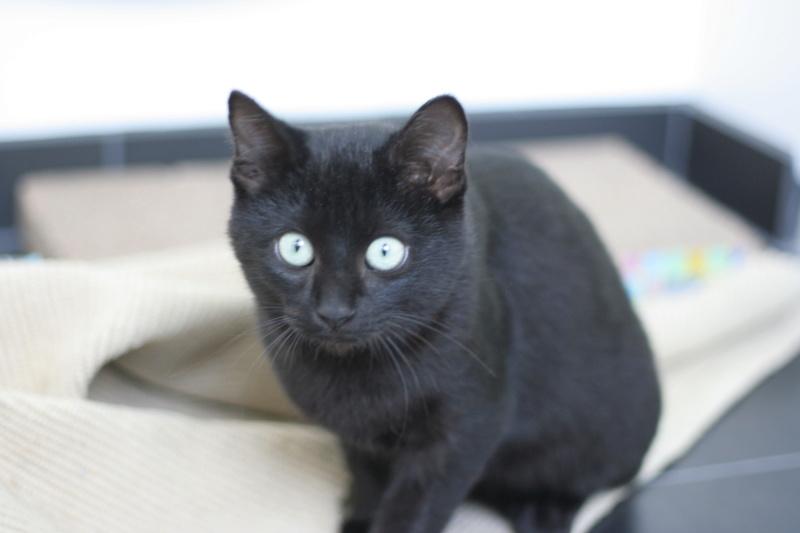 PITOU, chaton noir né le 02.06.19 Img_4020