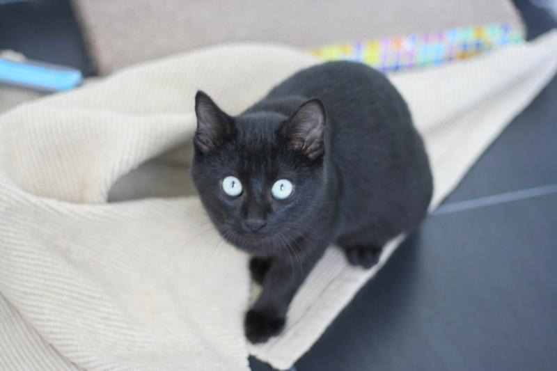 PITOU, chaton noir né le 02.06.19 Img_4022