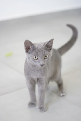 RAMSA, chatonne gris tigrée, née le 07.05/20 Img_5327