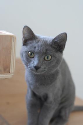 RAMSA, chatonne gris tigrée, née le 07.05/20 Img_5415