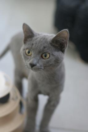 RAMSA, chatonne gris tigrée, née le 07.05/20 Img_5416