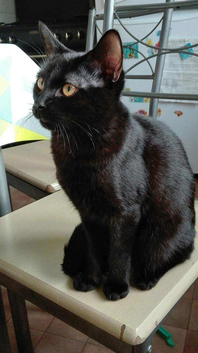 Oxana, chatonne noire, née le 03 mai 2018 Oxana110