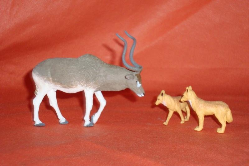Addax antelope by Joan  Dsc03311