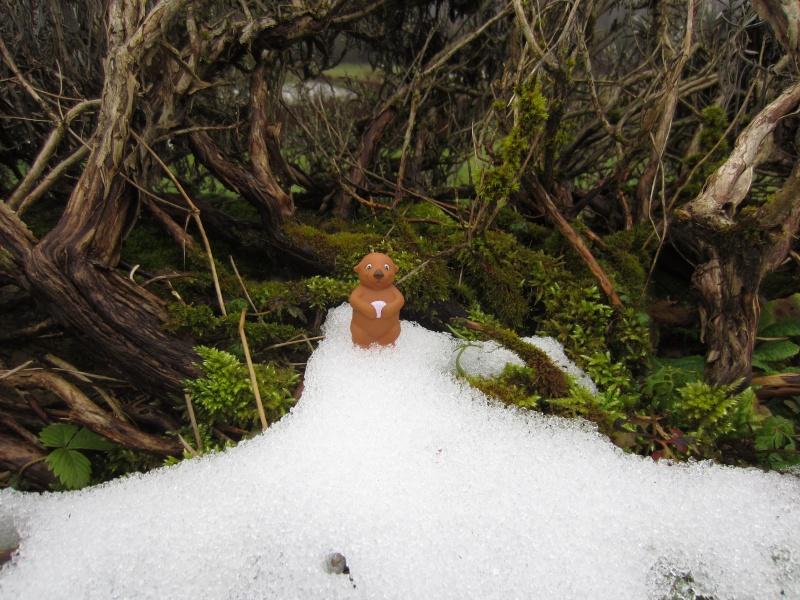 [MTPA] les tout petits amis de Marmotte Photo_11
