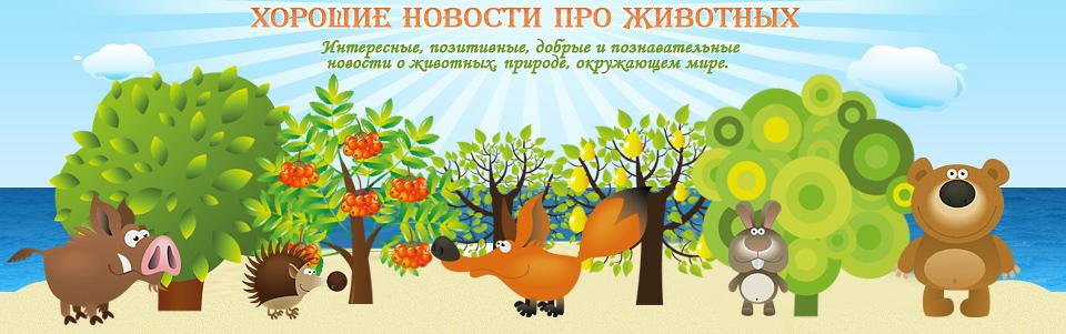 Эти удивительные животные, птицы и другие создания природы Positi10