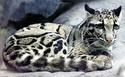 Эти удивительные животные, птицы и другие создания природы Cloude11
