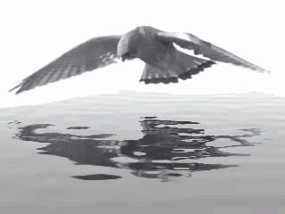 Sqirlz Water Reflections 2.6 - Βάλτε εφέ κυματισμού σε μια εικόνα ή ένα βίντεο 18553210