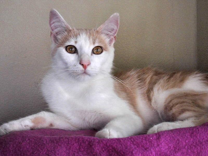 3 chatons à l'adoption (59) Cimg1124