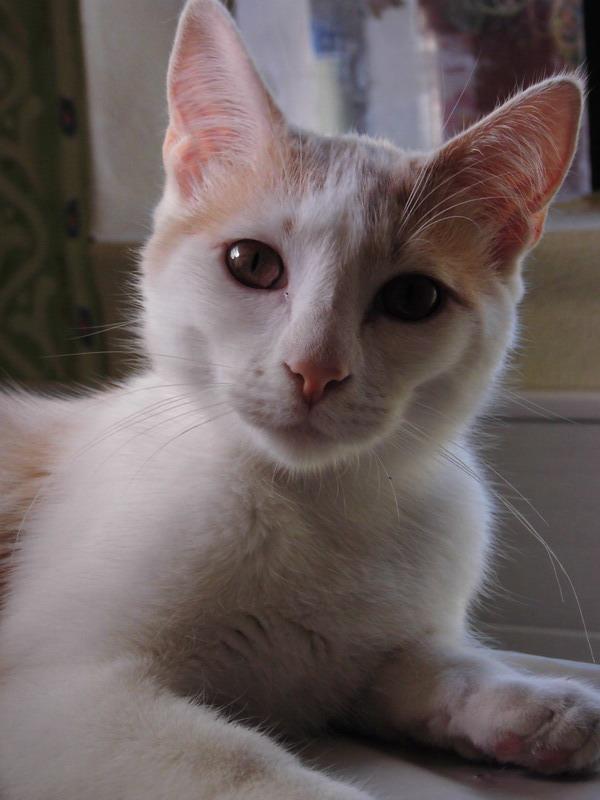 3 chatons à l'adoption (59) Cimg1130