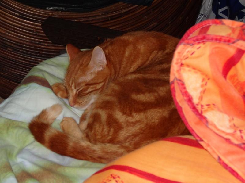 Ghost, petit chaton roux Dsc00412