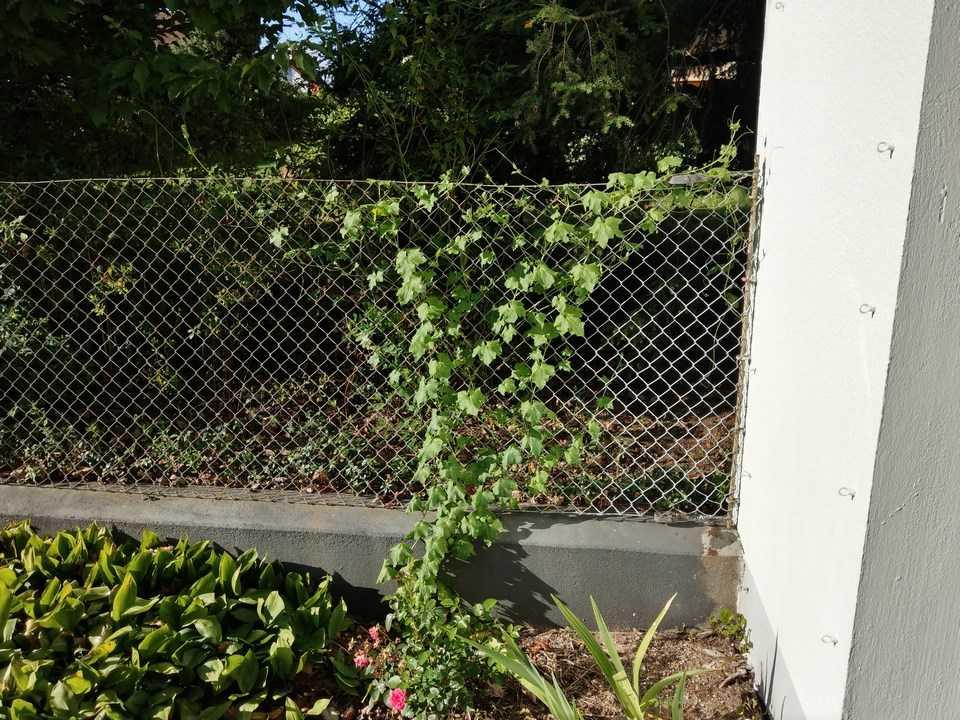 Wildblumen ( Sammelthread) - Seite 23 13_08_10