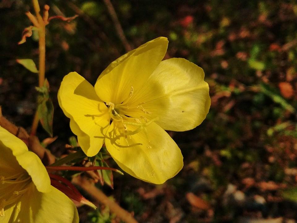 Wildblumen ( Sammelthread) - Seite 19 Imag1119