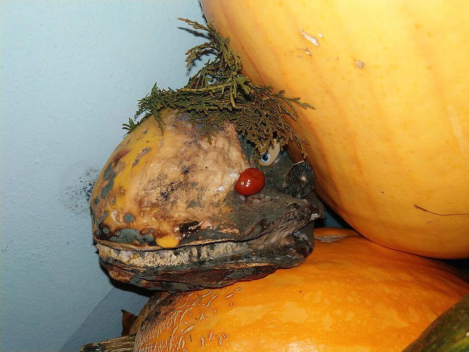 Kürbisgewächse - Cucurbitaceae: Melonen, Gurken, Kürbisse und Zucchini - alle Verteter der nichtsukkulenten Arten - Seite 14 Imag1716