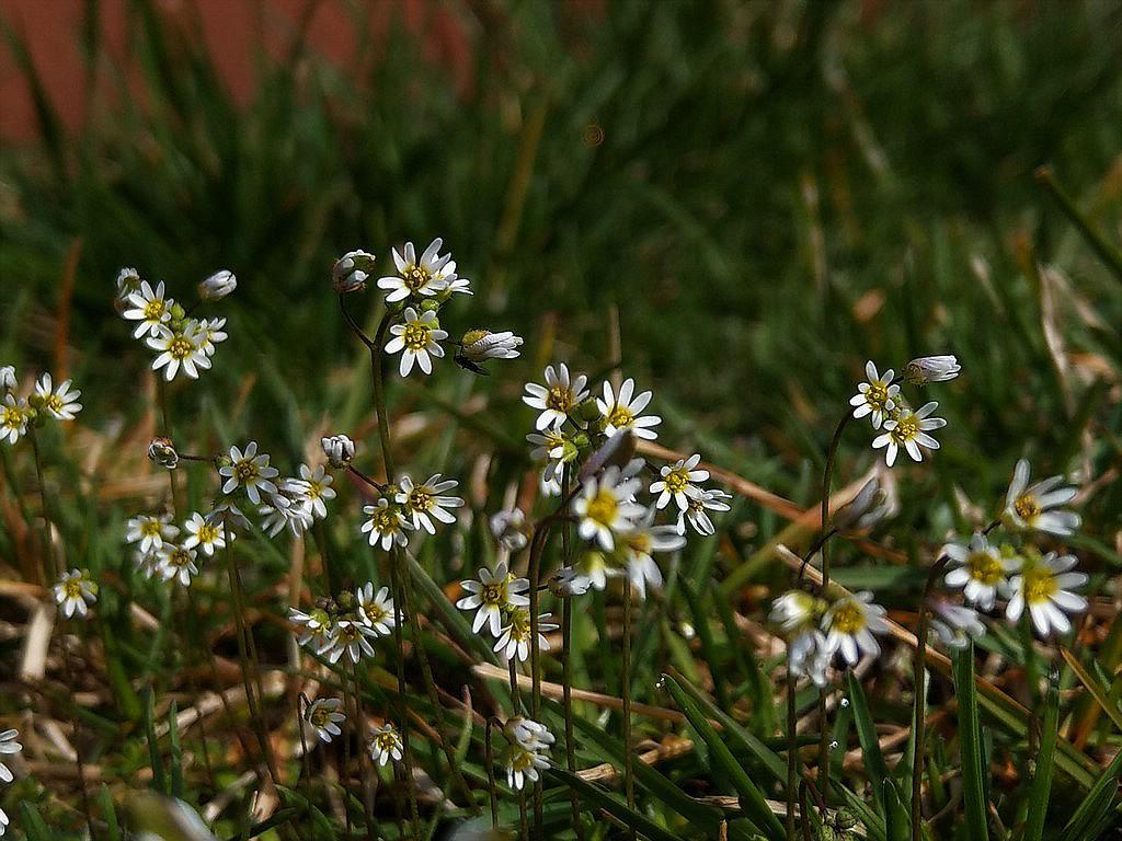 Erste Frühlingsboten im Garten und in Wald und Flur - Seite 88 Imag1846