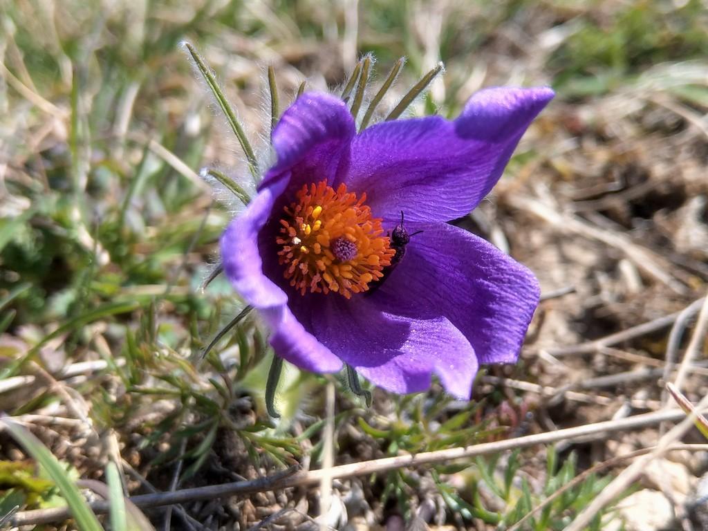 Erste Frühlingsboten im Garten und in Wald und Flur - Seite 92 Imag2119