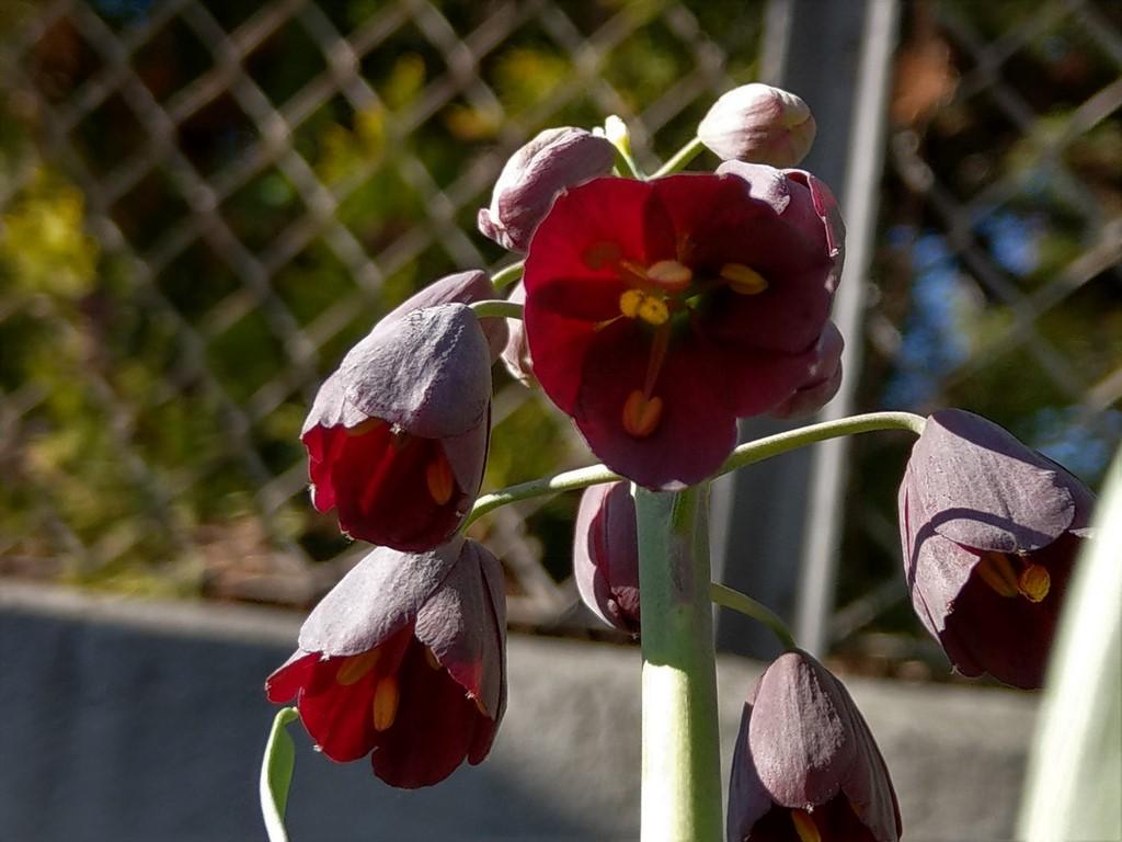 Erste Frühlingsboten im Garten und in Wald und Flur - Seite 94 Imag2328