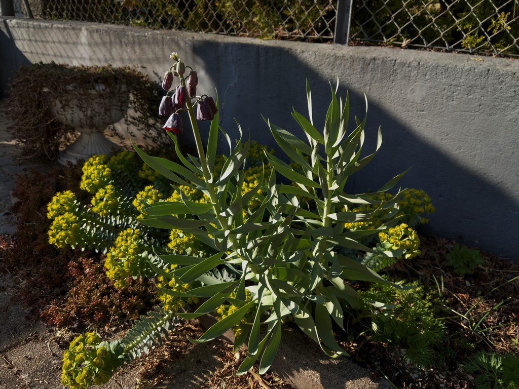 Erste Frühlingsboten im Garten und in Wald und Flur - Seite 94 Imag2329