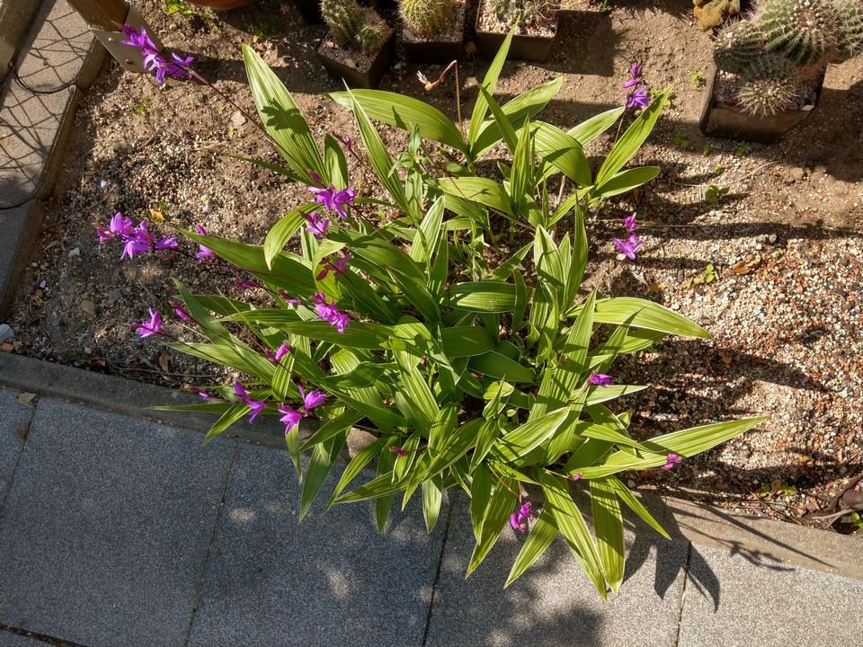 Orchideen 3 (fortlaufende Seiten 300 bis 400) - Seite 57 Imag5614