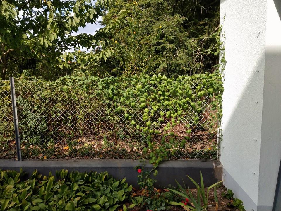 Wildblumen ( Sammelthread) - Seite 23 Imag9513