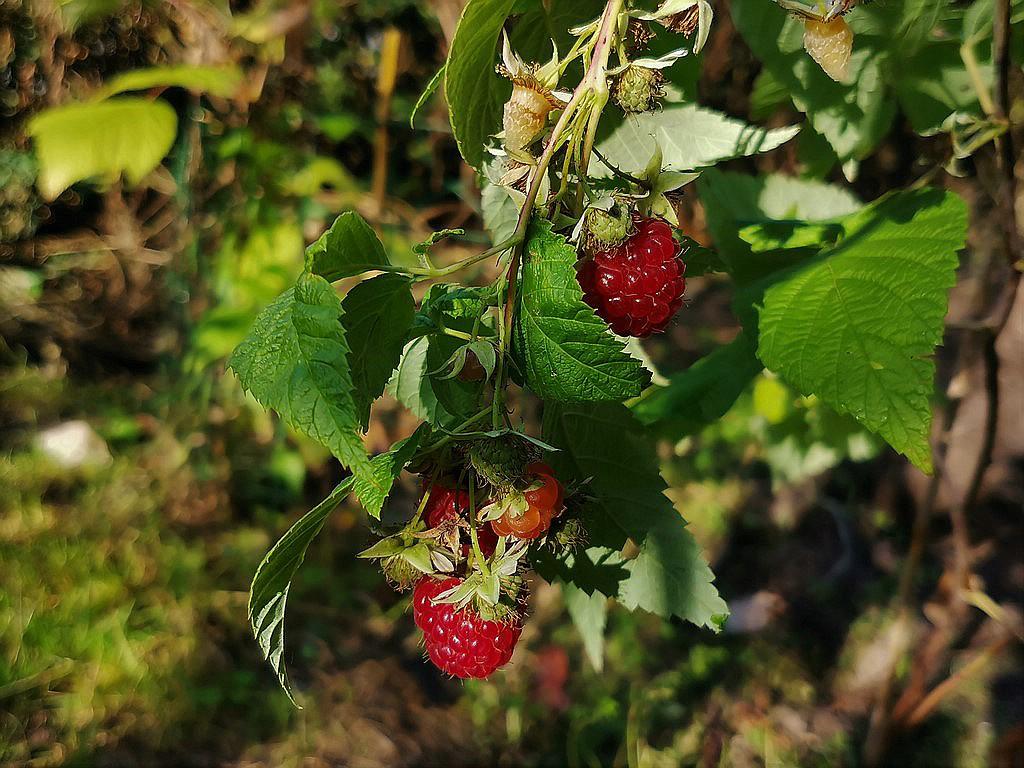 Was für Obstsorten habt Ihr denn im Garten? Aussaat, Spalier, Beerensträucher, Erfahrung und Hilfe :) - Seite 18 Img_2934