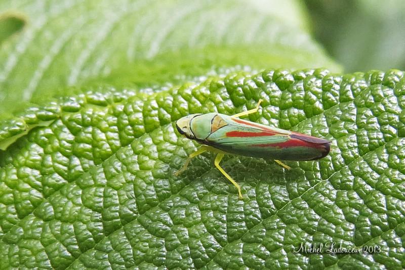 insectes à identifier ??? W3_cop13