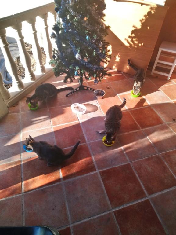 Les chats de l'AW Dsc_4710
