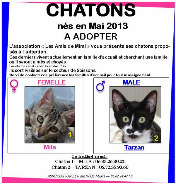 LES AFFICHES POUR ADOPTION - Page 2 Chaton12
