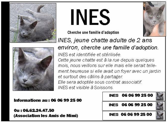 LES AFFICHES POUR ADOPTION - Page 2 Ines210