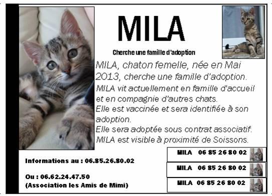 LES AFFICHES POUR ADOPTION - Page 2 Mila_010