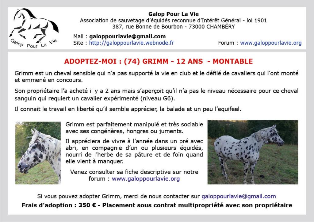 (74) Shoufni Ana dit GRIMM – Cheval de Selle Etranger hongre né en 2007 – Montable – 350 € + don libre à GPLV Affic128