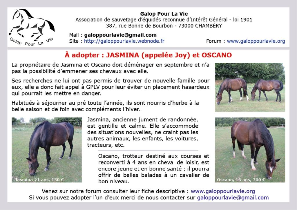(76) JASMINA dite JOY (joyy) – Jument TF née en 1997 – Montable pour balades  – 150 € + don libre à GPLV Affjas16