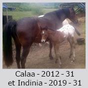 Galop Pour La Vie Calaai10
