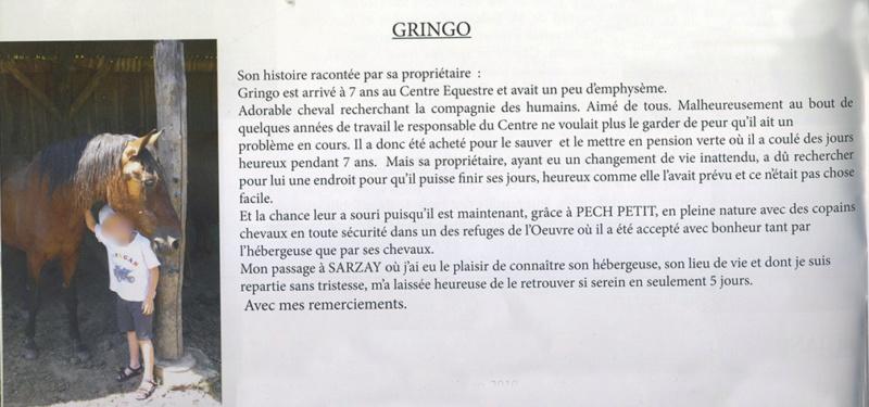 GRINGO – ONC Selle né en 1995 - Pris en charge par Pech Petit en octobre 2017 Gringo12