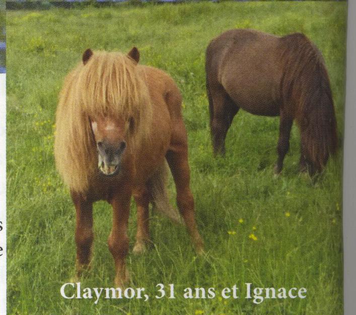 IGNACE - OI Poney typé Shetland né en 1996 - accueilli chez Pech-Petit en septembre 2017   Ignace11