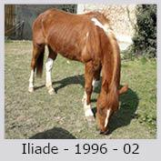 Galop Pour La Vie Iliade10