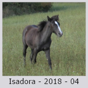 Galop Pour La Vie Isador10