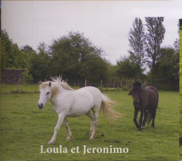 JERONIMO - OI Poney né en 1998 - accueilli chez Pech-Petit en septembre 2017   Loulaj12
