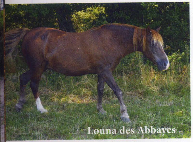 LOUNA - Pottok née en 1999 - accueillie chez Pech-Petit en septembre 2017   Louna11