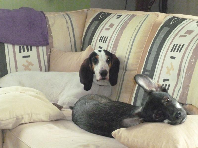 LOVE : chienne 3 ans - adoptée Love11