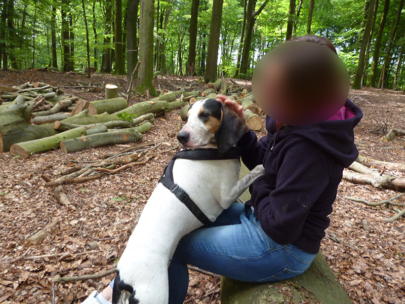 LOVE : chienne 3 ans - adoptée Love311