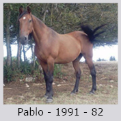 Galop Pour La Vie Pablo-10