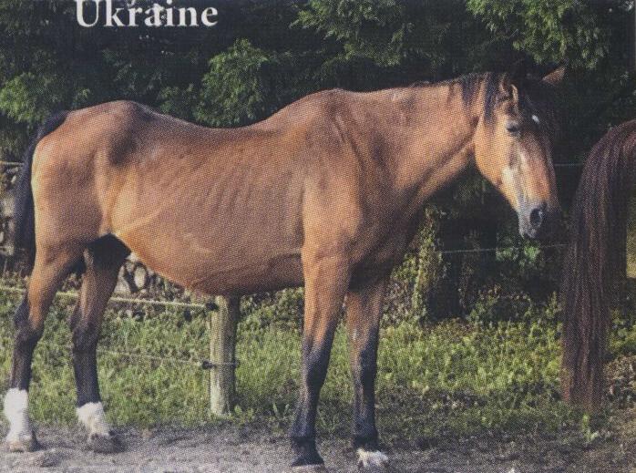 UKRAINE - ONC Selle née en 1987 - accueillie en janvier 2014 chez Pech-Petit - Page 2 Pageuk10